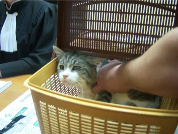Кот на суде
