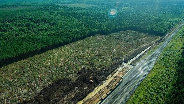 Вырубка леса вокруг Шиеса. Лето 2018