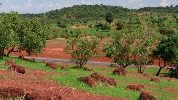 Сахель — тропическая саванна в Африке, своеобразный переход между Сахарой на севере и более плодородными землями на юге