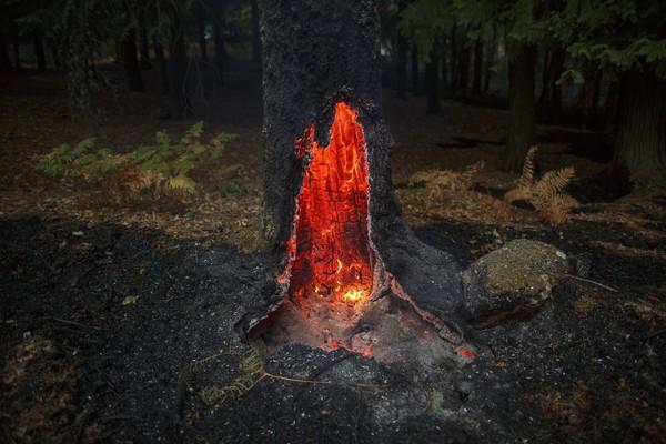 Сгоревшее дерево в Вузеле, Португалия. В результате пожаров на Иберийском полуострове погибли десятки людей. Фото: Pablo Blazquez Dominguez—Getty Images